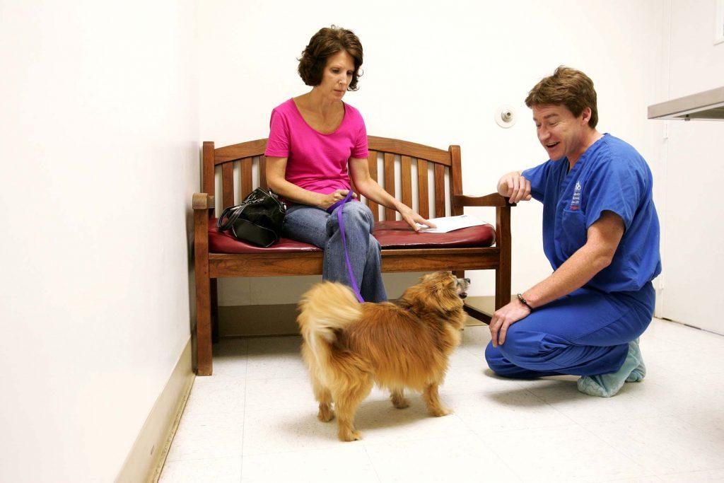 Лечение суставов у шпицев - диагноз, диагностика, признаки заболевания, фото