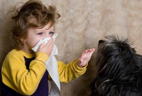 Как избавиться от шерсти домашних животных